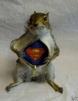 super-squirrell