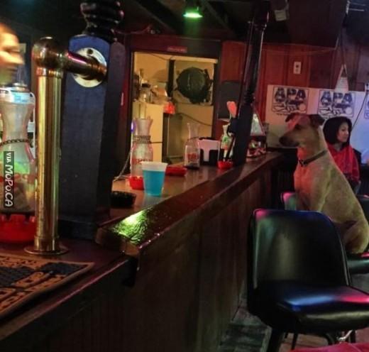 dog-bar