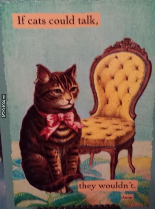 cats-talk