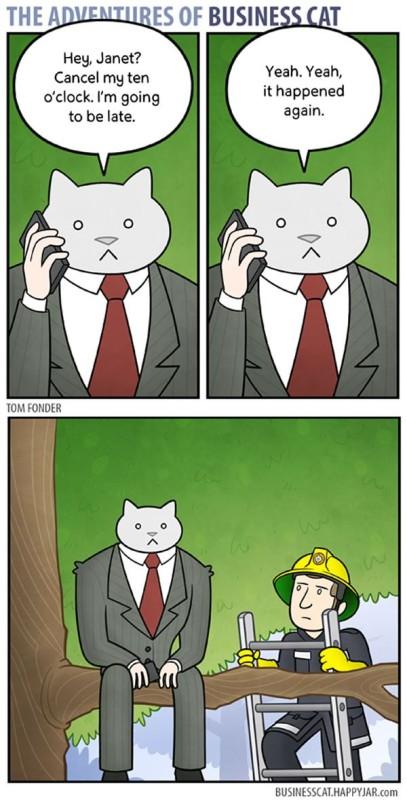 business-cat